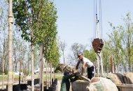 Декоративные деревья и крупномеры для сада дома или коттеджа
